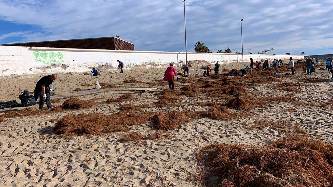 Més de 100 voluntaris recullen vora 1.500 quilos de residus a la platja del Morrongo
