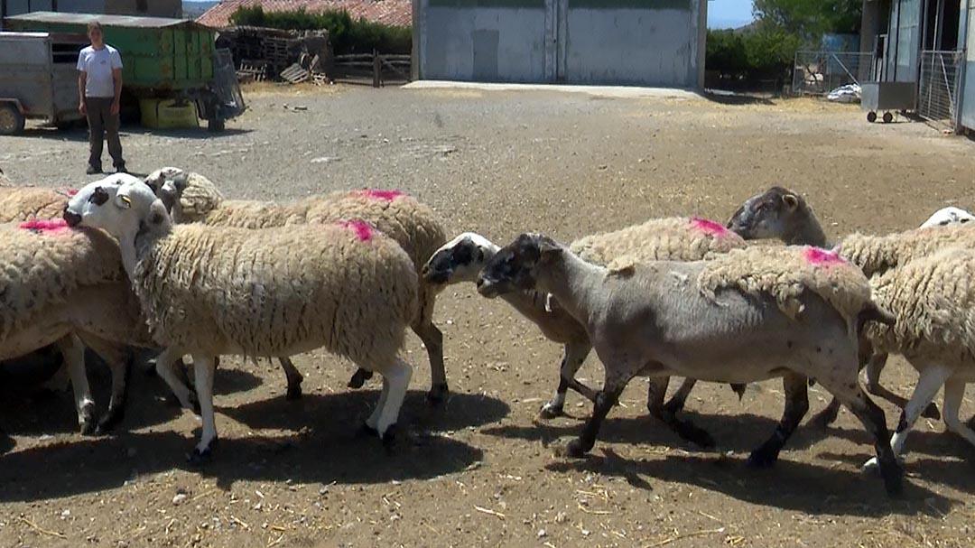 Conselleria publica ajudes al sector ramader per les pèrdues del coronavirus