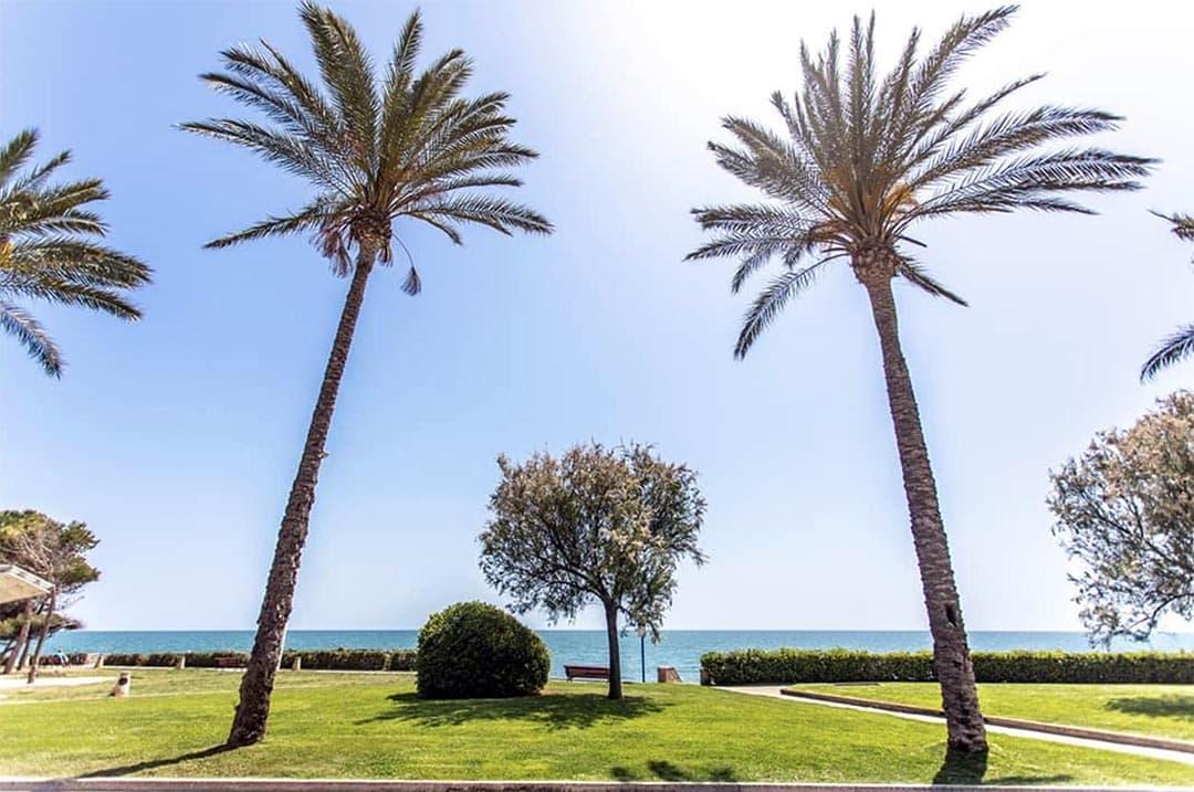 Es renoven 14 palmeres del passeig marítim de Vinaròs pel seu estat sanitari