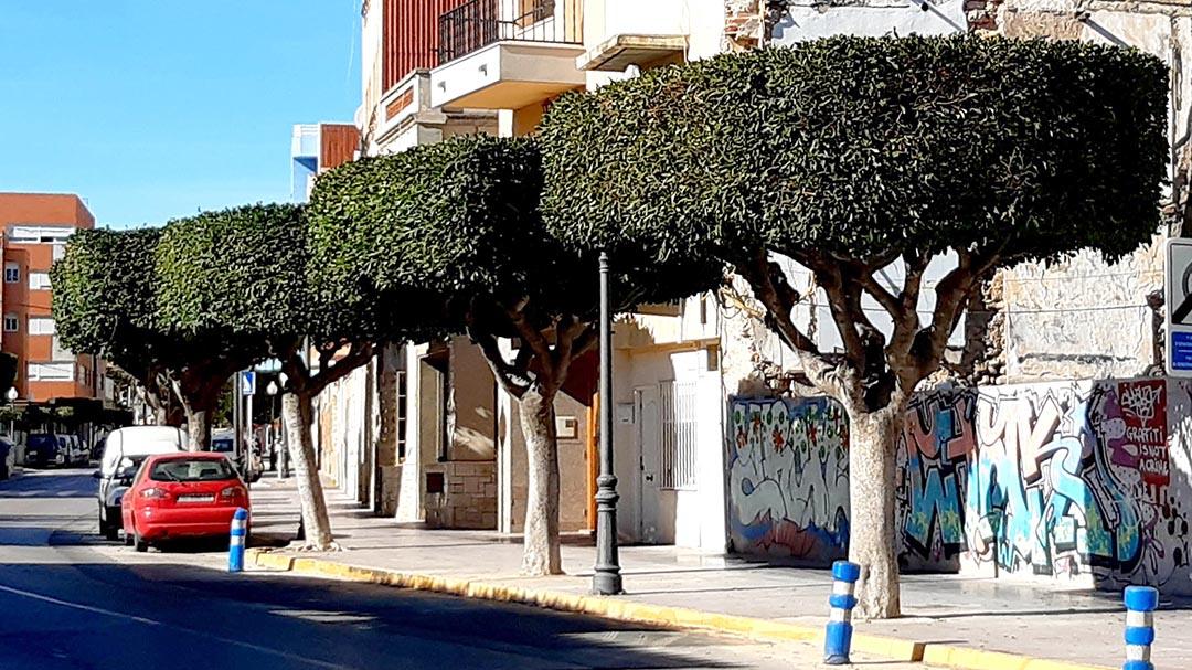 Benicarló està fent la poda anual de 5000 arbres