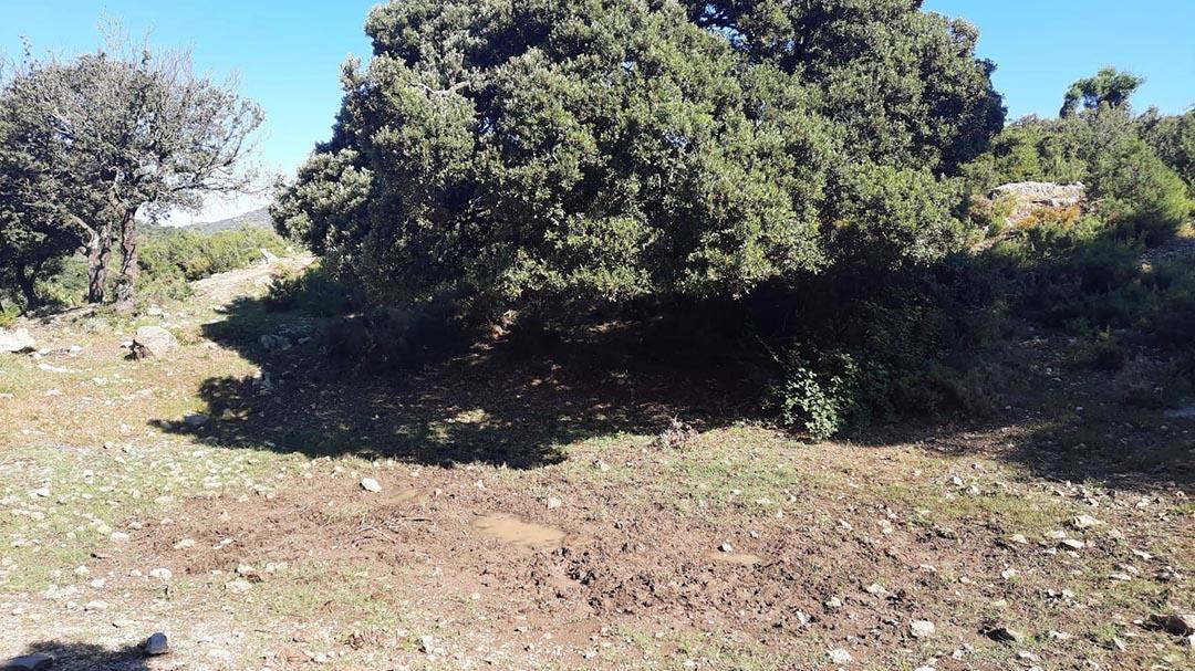 Morella vol protegir a una espècie de 250 milions d'anys