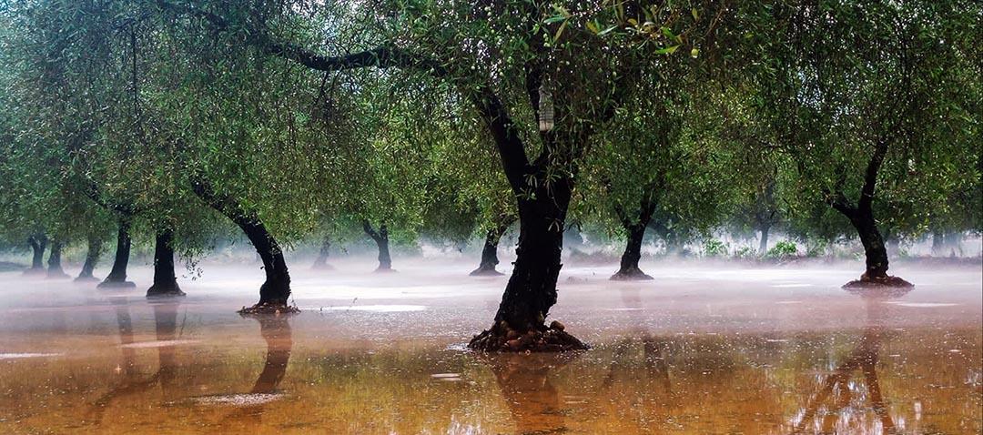 La pedra ha afectat 1.000 hectàrees de les comarques al Maestrat i l'Alcalatén
