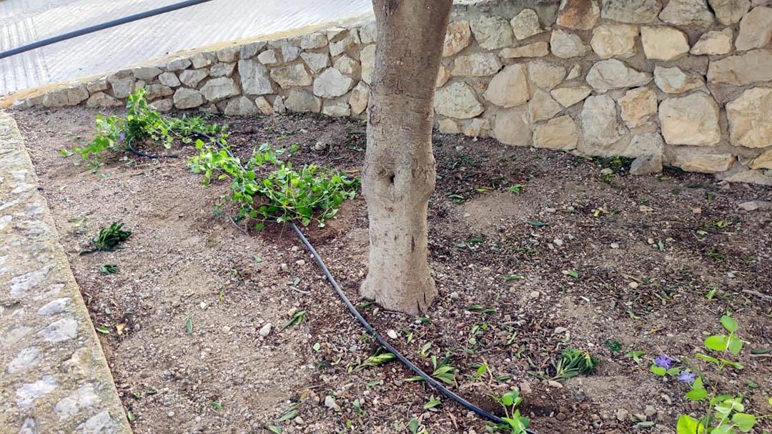 L'Ajuntament de Peníscola impulsa la millora de la jardineria en el municipi