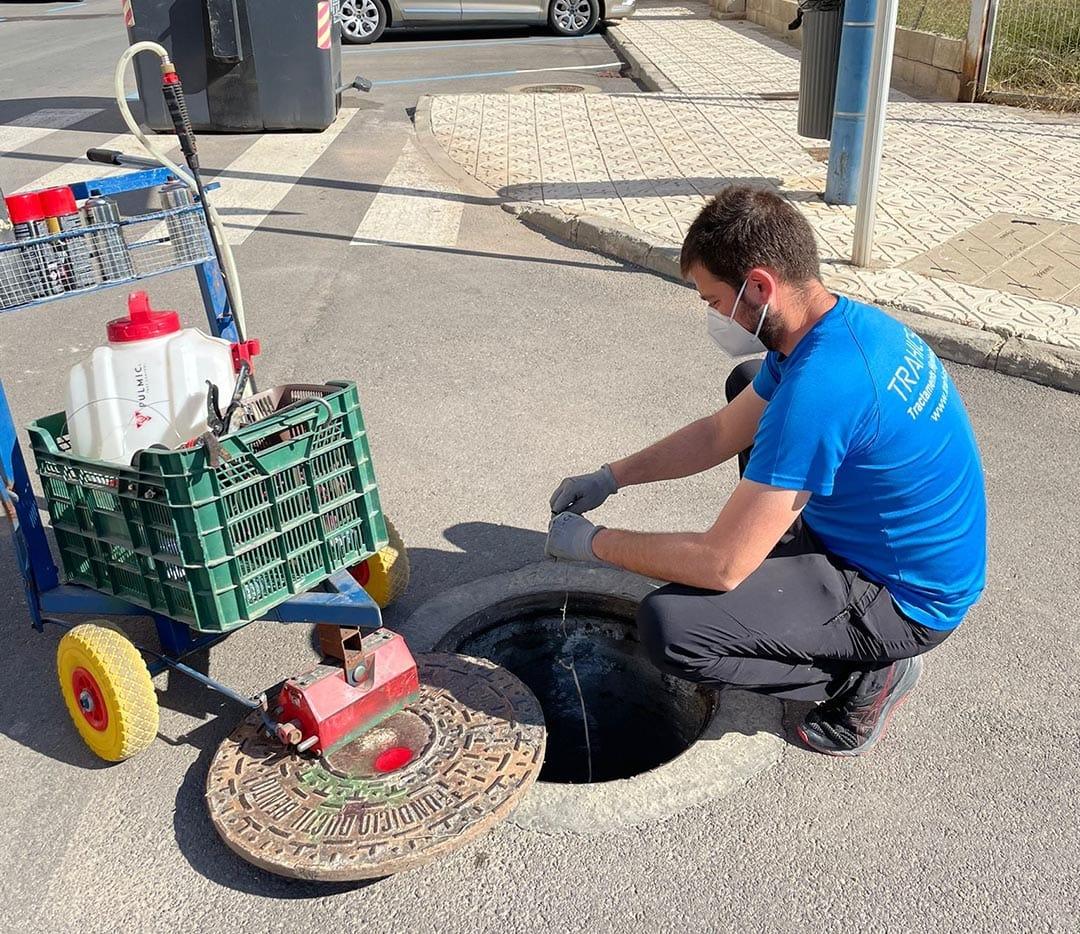 La Regidoria de Serveis continua amb els treballs per al control de plagues a Peníscola